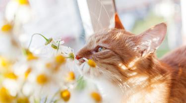 Wewangian kesukaan kucing