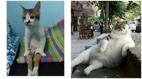 Pose kucing saat duduk (Sumber: Instagram/dramaojol.id/Brightside)