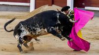 Matador Antonio Ferrera saat adu banteng di arena adu banteng Las Ventas, Madrid, Spanyol, Minggu (4/7/2021). Adu banteng ini berlangsung di tengah pandemi virus corona COVID-19. (AP Photo/Manu Fernandez)