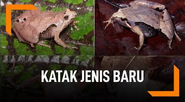 Ini Dia Katak Jenis Baru Ditemukan di Sumatera