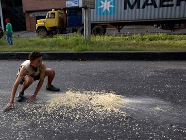 Seorang pemuda mengumpulkan biji-bijian jagung yang jatuh dari sebuah truk akibat dijarah di luar pelabuhan di Puerto Cabello, Venezuela, Selasa (30/1). Venezuela tengah menghadapi krisis ekonomi yang cukup parah. (AP Photo/Fernando Llano)