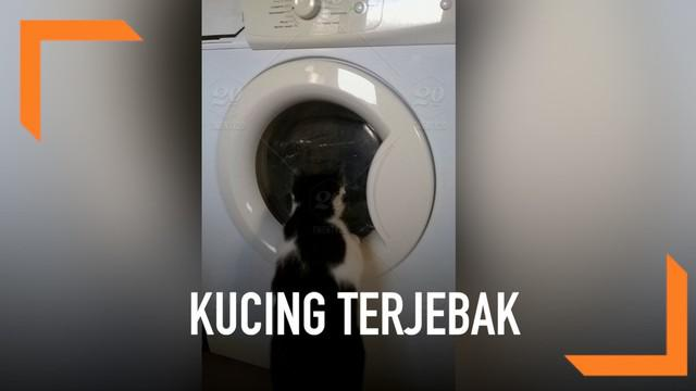 Seekor kucing ditemukan selamat usai terjebak di dalam mesin cuci yang menyala selama 30 menit. Meski selamat, kucing itu mengalami memar pada kepala dan matanya.