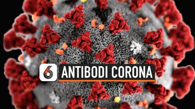 antibodi corona