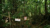 tersesat di Hutan Aokigahara. Source:  Tofugu
