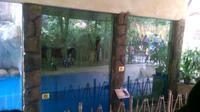 Pengunjung antusias menyambut kehadiran koleksi terbaru Kebun Binatang Gembira Loka yaitu enam ekor burung Penguin.