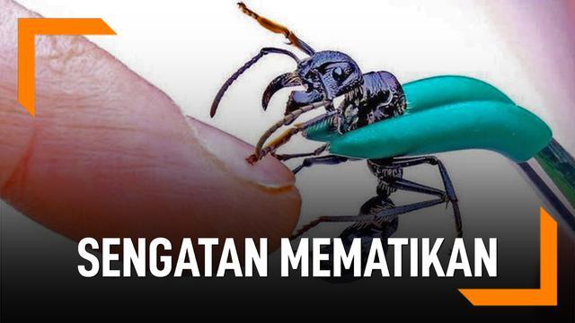 Sengatan serangga mematikan