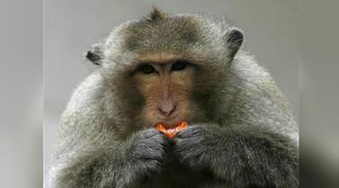 Ilustrasi monyet