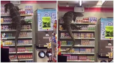 Viral Video Biawak Besar Berkeliaran di Minimarket, Bikin Panik Pelanggan