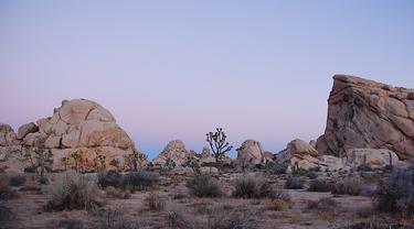 Taman Nasional Joshua Tree, California (Jarek Tuszyński / Wikimedia)