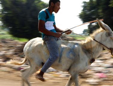 Lomba Keledai di Mesir