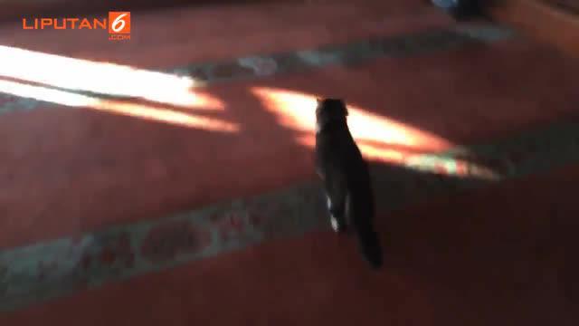 Ia membukakan pintu masjid untuk para kucing yang kedinginan di musim dingin.