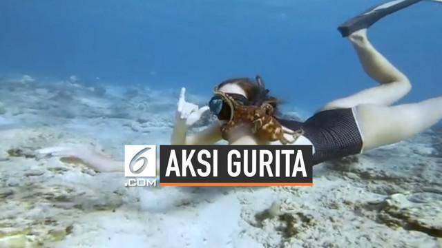 Beberapa wanita di Hawaii diganggu gurita yang mencengkram saat mereka menyelam. Hewan tersebut seakan tak mau terlepas, mulai dari paha hingga wajah para penyelam.
