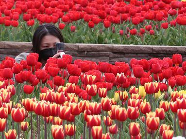 Seorang perempuan yang memakai masker mengambil gambar bunga tulip di sebuah taman di Goyang, Korea Selatan, pada 13 April 2021. Korea Selatan sedang menyambut musim semi yang akan berlangsung dari Maret hingga Mei. (AP Photo/ Ahn Young-joon)