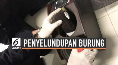 Petugas Bea dan Cukai Bandara Soekarno-Hatta menggagalkan penyelundupan puluhan ekor burung dari Malaysia.