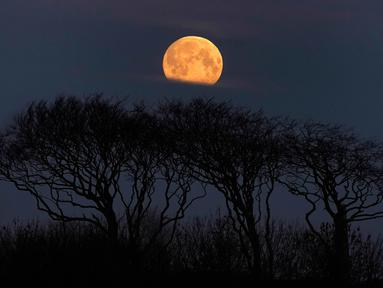 Fenomena super snow moon terlihat di langit Whitley Bay, Inggris, Selasa (19/2). Super snow moon adalah fenomena bulan penuh paling terang sepanjang tahun. (Owen Humphreys/PA via AP)