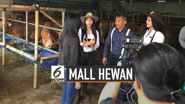 Salah satu tempat penjualan hewan kurban di depok sedang ramai dibicarakan. Tempat tersebut milik Haji Doni di kawasan Cimanggis, Depok, Jawa Barat.