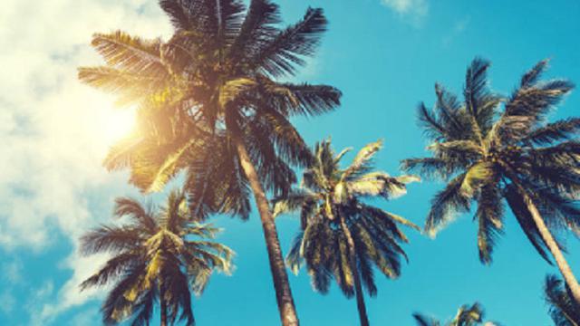 Ilustrasi pohon kelapa (iStock)