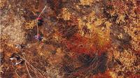 Kebakaran hutan dan lahan di Penajam Paser Utara Kalimantan Timur. (Liputan6.com/Abelda Gunawan)