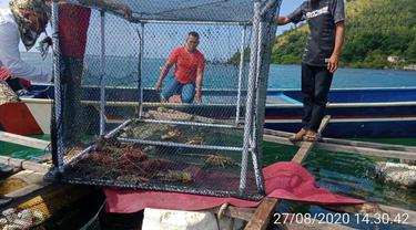 Salah satu lokasi budidaya lobster melalui karamba yang dikembangkan warga Suku Bajo di Pulau Nain, Sulut.