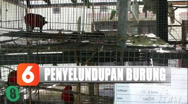Polisi amankan 85 ekor burung yang dilindungi sebelum dijualbelikan di Maluku Utara.