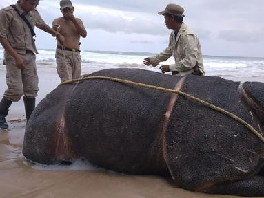 Foto yang dirilis 26 April 2018 menunjukkan petugas memeriksa tubuh badak jawa jantan yang ditemukan mati di Pantai Karang Panjang, Taman Nasional Ujung Kulon. Bangkai badak bernama Samson itu ditemukan dalam kondisi utuh, bercula dan lengkap. (AFP Photo)