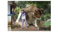 Editan Foto Kucing Raksasa ini Kocak Banget (sumber:Instagram/niduy_cahyudin)