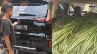 Mitsubishi Xpander Cross angkut pakan sapi (TikTok/@kandangmabesfarm)