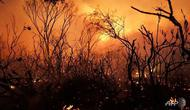 Ilustrasi kebakaran hutan dan lahan di Australia selama musim kemarau, lazim dikenal sebagai fenomena Bushfire (Rob Griffith / AFP PHOTO)
