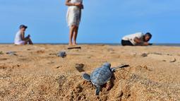 Seekor tukik penyu hijau merayap dari keluar sarangnya menuju arah laut di sebuah pantai Pulau Manda, Kenya, 18 Juni 2019. (TONY KARUMBA/AFP)
