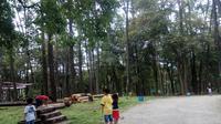 Hutan Pohon Pinus di wisata Punti Kayu Palembang (Liputan6.com / Nefri Inge)