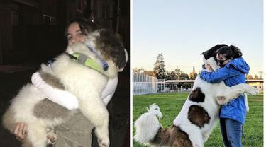 perbandingan hewan setelah dirawat manusia