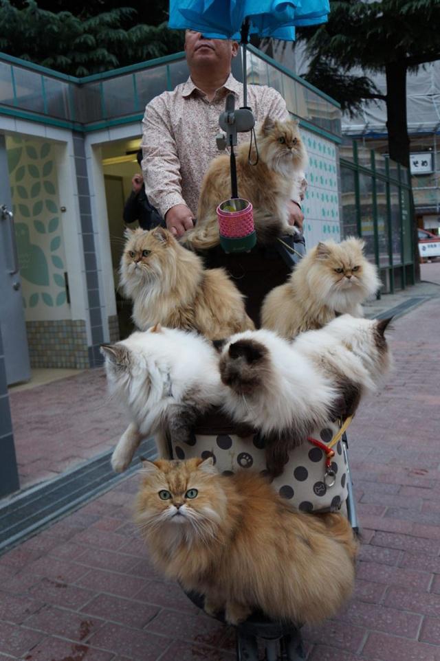 Kucing milik Suga yang diajak jalan-jalan pakai kereta dorong bayi | Photo: Copyright oddyticentral.com