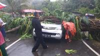 Pohon tumbang di Jayapura. (Liputan6.com/Katharina Janur/Polda Papua)
