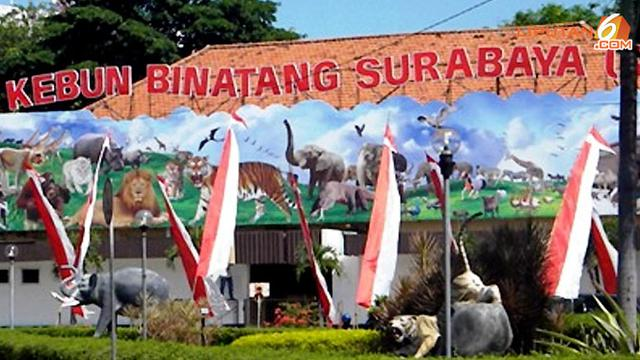 5 Hal yang Jarang Diketahui soal Kebun Binatang Surabaya - Surabaya  Liputan6.com