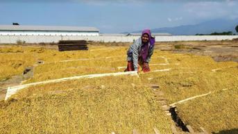 Pengamat: Tingkatkan Dulu Kesejahteraan Petani, Baru Naikkan Cukai Rokok