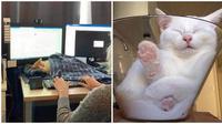 Kucing tidur (Sumber: Boredpanda)