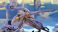 Gurita dapat bersembunyi dan menjadikan dirinya seperi benda yang berada di sekitarnya (AFP)