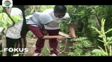 Pasutri di Lombok Utara, Nusa Tenggara Barat, ditangkap polisi karena tanam 20 batang ganja di pekarangan rumah untuk bumbu masakan.