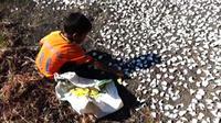 Akibat kekeringan, sejumlah warga Sumba Tengah, NTT, setiap hari terpaksa mencari ubi beracun yang tumbuh di lereng-lereng bukit untuk dikonsumsi. (Liputan6.com/Ola Keda)