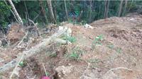 Bupati Bolaang Mongondow menanggapi runtuhnya tambang emas ilegal. (Liputan6.com/Yoseph Ikanubun)