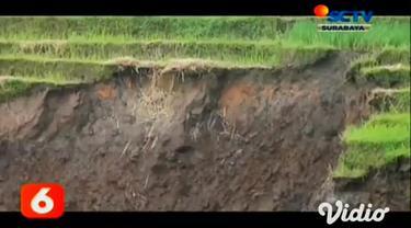 Guyuran hujan intensitas tinggi sejak beberapa hari terakhir, mengakibatkan area persawahan di lereng Gunung Penanggungan, Kabupaten Mojokerto, longsor. Meski tak sampai menimbulkan korban, namun material longsor menimbun kandang ternak dan hektaran ...