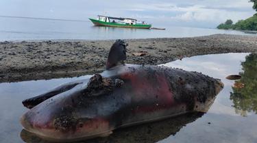 Seekor bangkai ikan lumba-lumba, ditemukan warga terdampar di sekitar Pantai Towera, Desa Towera, Kecamatan Siniu, Kabupaten Parigi Moutong (Parimo) Sulawesi Tengah (Sulteng) (Arfandi Ibrahim/Liputan6.com)
