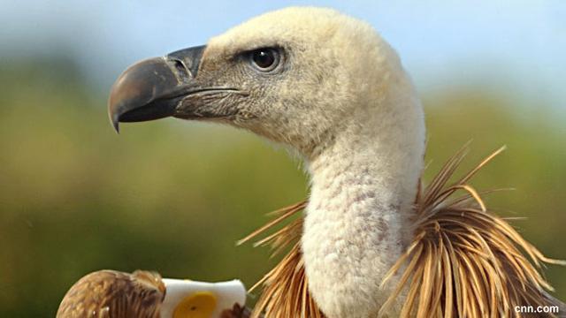 8700 Koleksi Gambar Pola Hewan Burung HD Terbaik