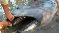 Sebagian besar orang percaya bahwa ikan mati terdampar merupakan pertanda akan sebuah bencana.