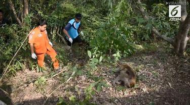 Sekitar 20 ekor monyet mati di Provinsi Rayong, Thailand. Diduga, karena memakan semangka beracun.