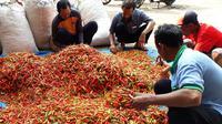 Kementerian Pertanian terus melakukan pemantauan terhadap pasokan aneka cabai dan bawang merah di tanah air menjelang lebaran Iedul Fitri.