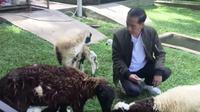 Jokowi saat melihat kelahiran anak kambing yang dirawatnya di Istana Bogor, Jawa Barat.