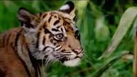 Unjuk rasa ratusan warga korban banjir di Tangerang berujung ricuh. Sementara itu, tiga ekor bayi harimau Sumatera lahir di AS.