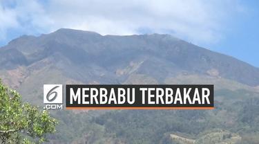 Api masih berkobar di kawasan hutan gunung Merbabu. Upaya pemadaman api terus dilakukan namun petugas terkendala medan yang sulit di lokasi kebakaran.