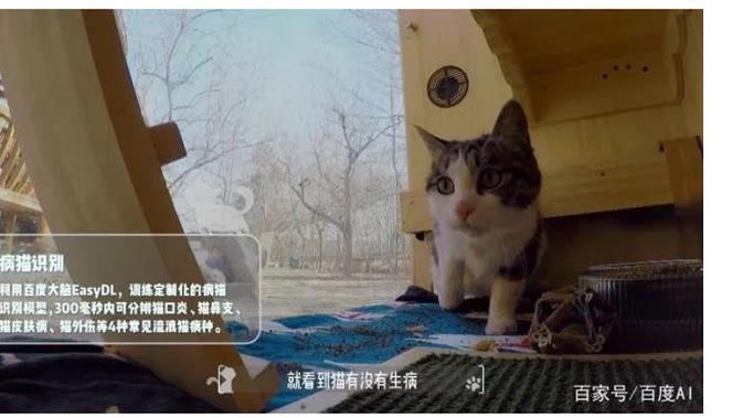 Penampungan kucing Baidu (Foto: Gizmochina)
